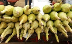Maize corn bhutta
